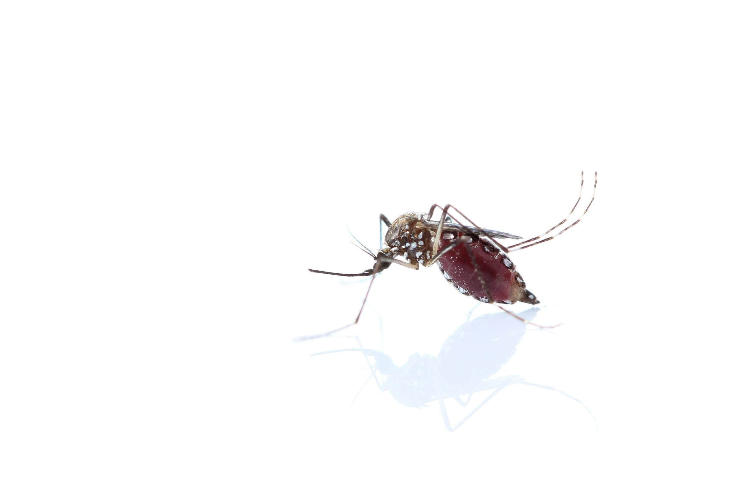 ¿Qué es el virus Chikungunya?