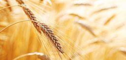 Existen diferentes tipos de intolerancia al gluten o celiaquía.