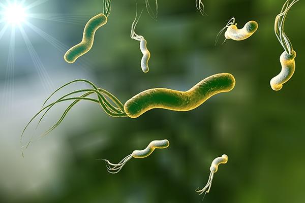 Es posible erradicar la bacteria H. pylori.